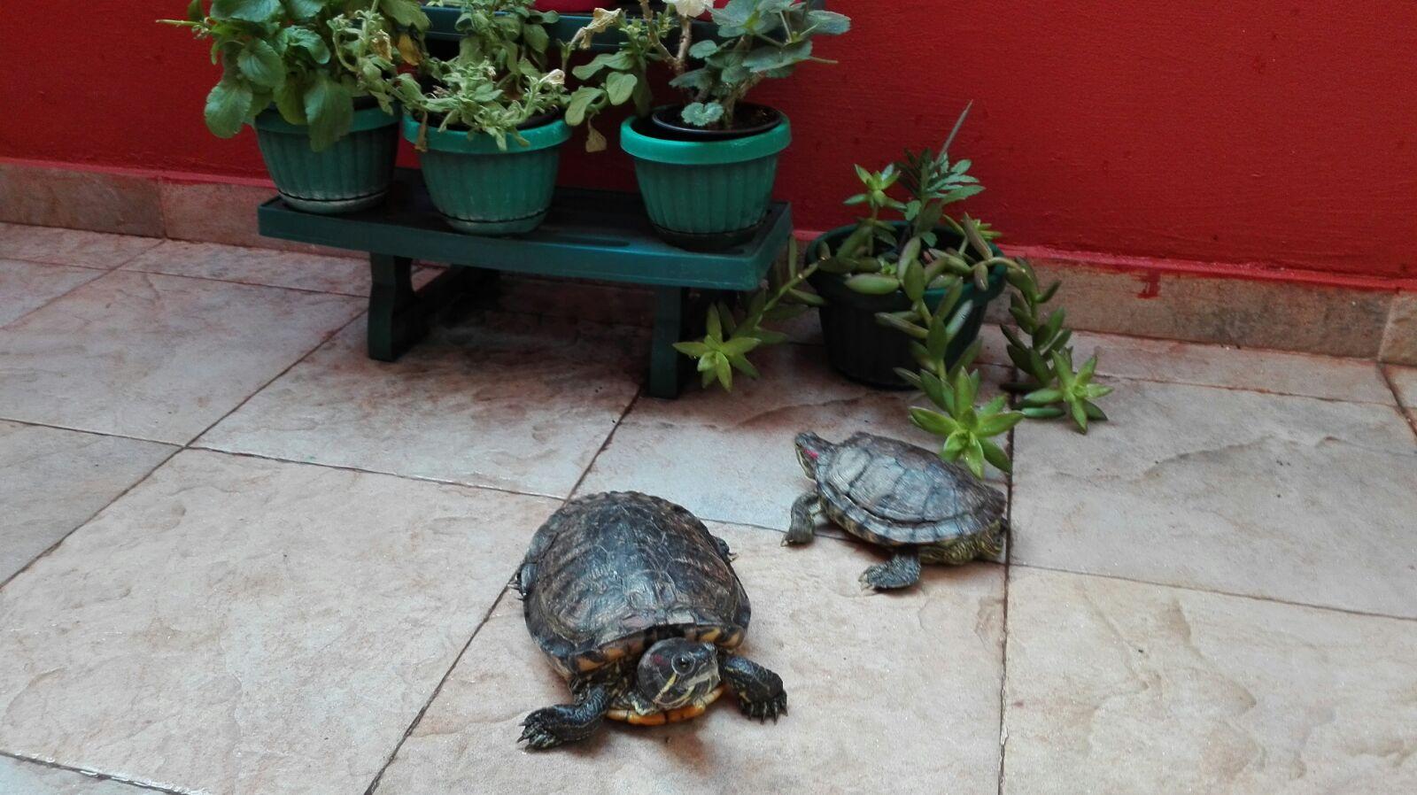 Mis tortugas, en 'De camino por la vida'